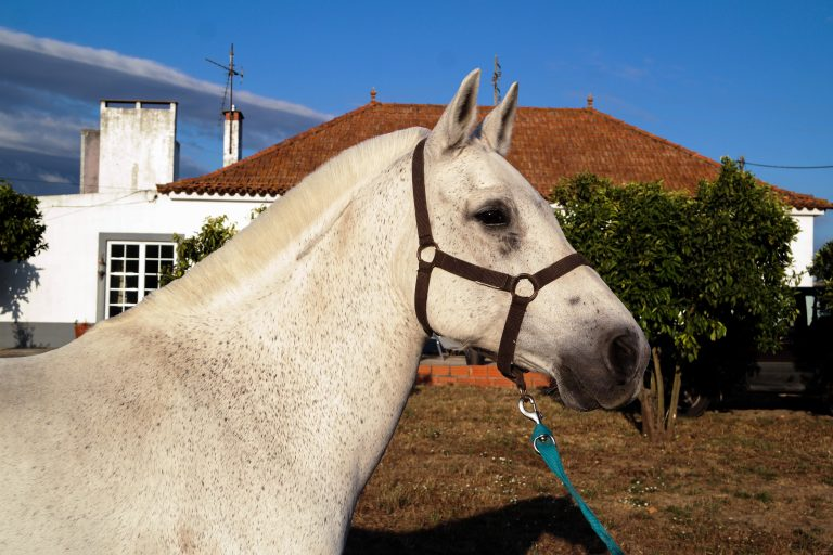 Présentation du poney Diabolo